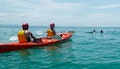 Byron Bay: Three-Hour Dolphin Kayaking